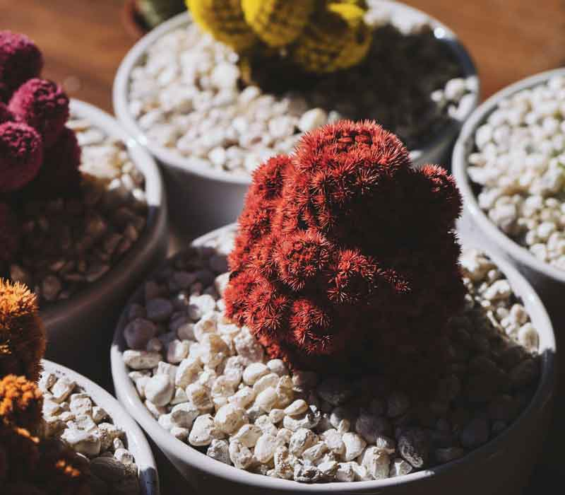 Adorable Plants that can be Grown Inside your Home