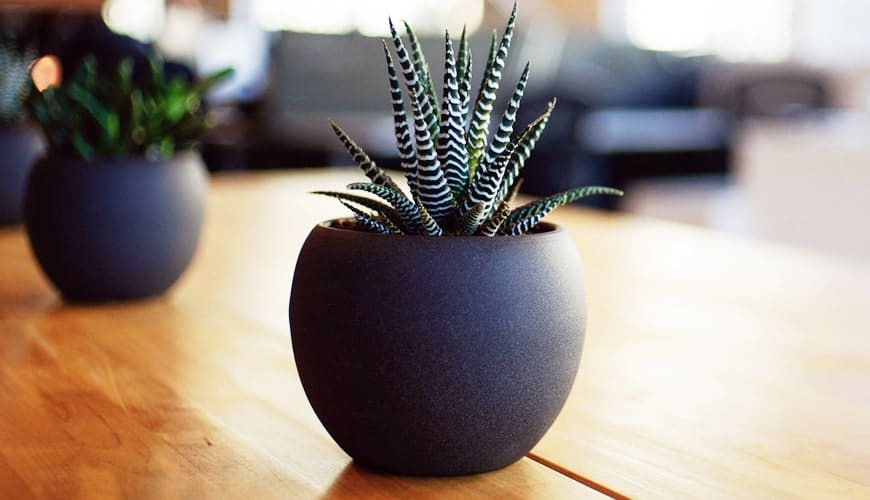 Minimalistic pots that goes well with houseplants
